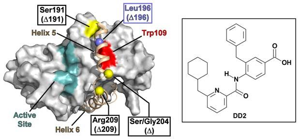 molecular surface of the dimer interface of a KSHV protease monomer