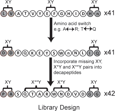 Library of peptides