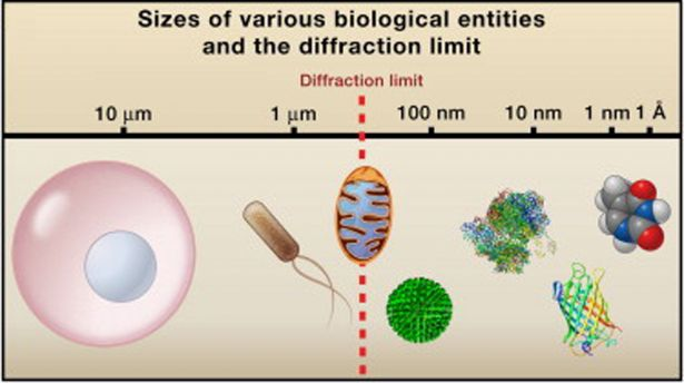 sizes of various biological entities and the diffraction limit