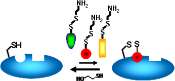Schematic of disulfide trapping (tethering)