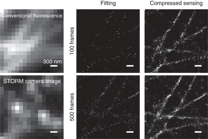 STORM imaging of immunostained microtubules